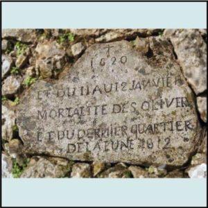 Pierre des oliviers