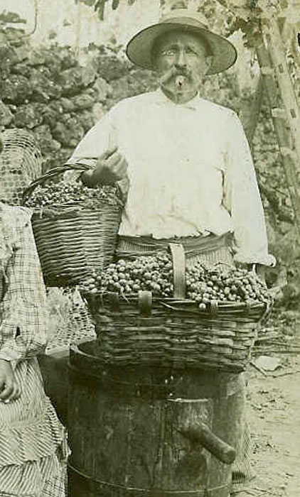 Corbeille en osier, canne et châtaignier pour la cueillette du raisin.